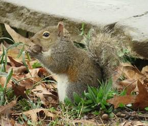Squirrel - Marty Thurman