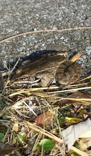 Frog - Randy Ratliff