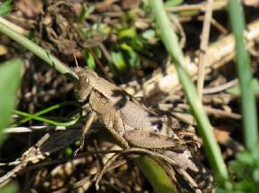 grasshopper - Joe Brewington