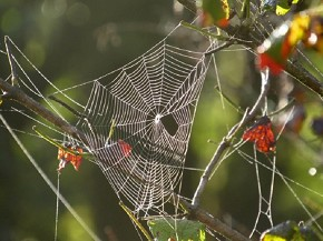 dewy spider web - Joe Brewington