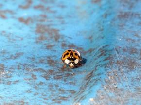 Ladybug - Joe Brewington