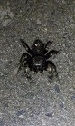 spider - Randy Ratliff